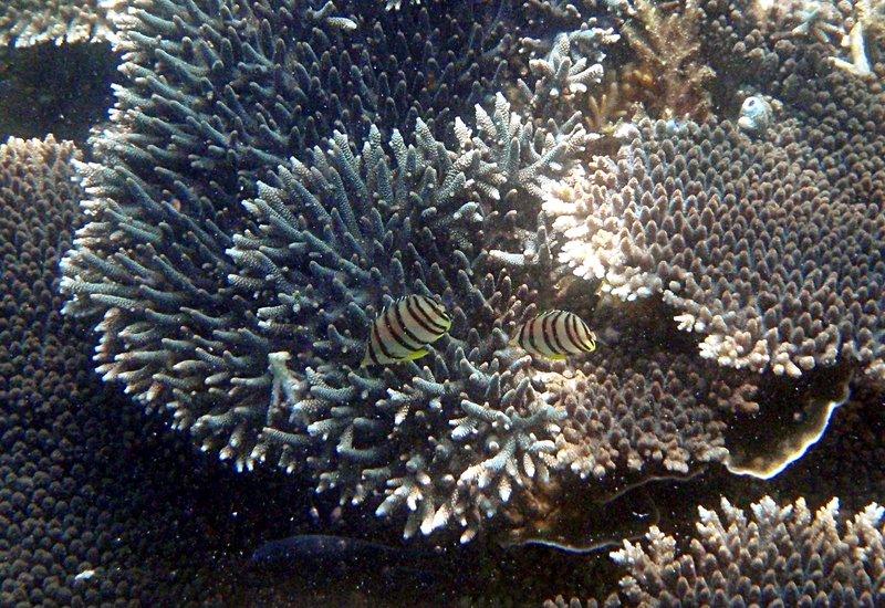 sep 27 2120 2 coral fish