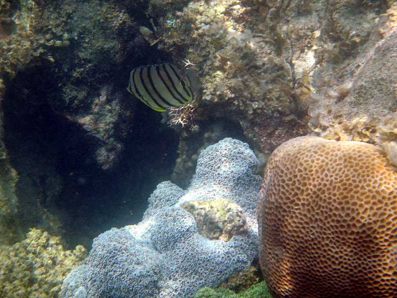 sep 27 2349 coral fish