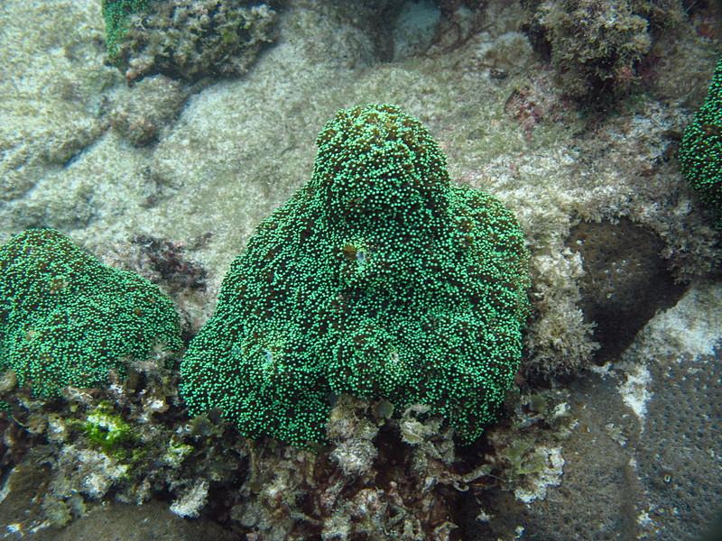 sep 29 5480 green coral