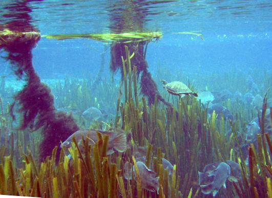 turtle_fish.jpg