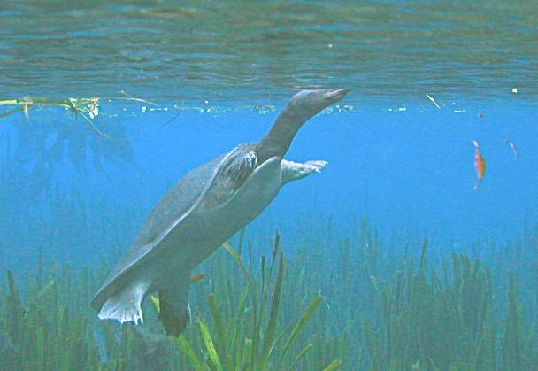 turtle_standing.jpg