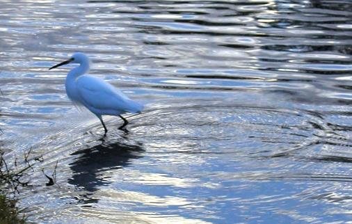 white_bird.jpg