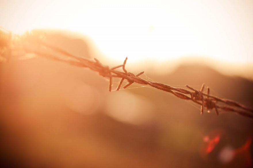 Barbed Wire in Sun
