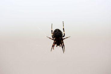 Life-of-Pix-free-stock-spider-web-animal-LEEROY-1440x960