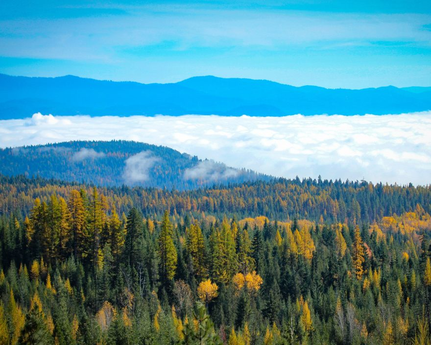 Trees and Forest landscape with clouds and mountains in Northeast Washington