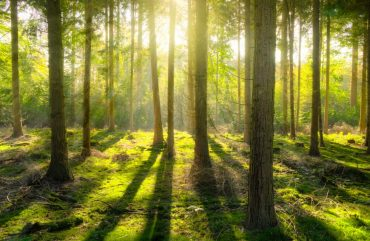 magic-forest-free-license-CC0-980x637