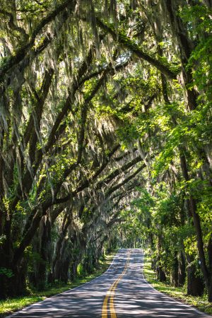 trees-arching-over-the-road-in-tallahassee-florida