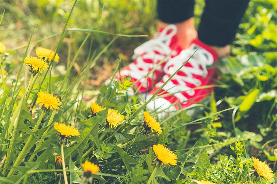 Red Happy Shoes in Grass and Dandelions