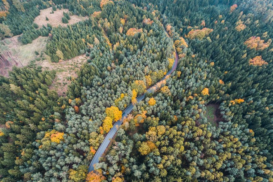 Lonely Road In Forest Aerial View