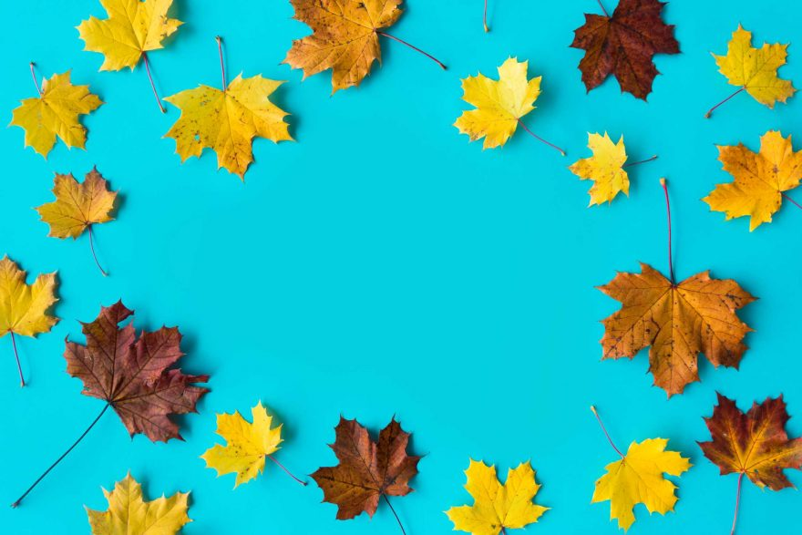 Hero Image Autumn Leaves on Flat Blue Background