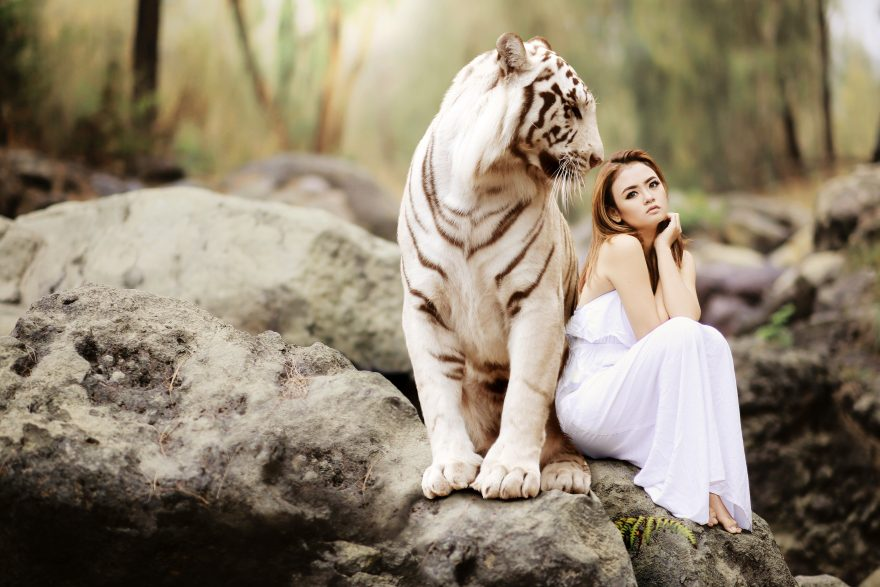 Pretty girl in white dress next to white Bengal Tiger
