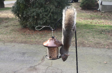 Slow Mo Squirrel