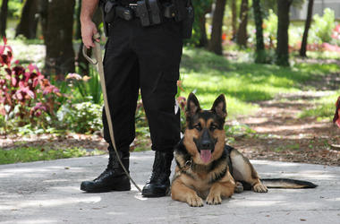 Police Officer, Police Dog, German Shepherd