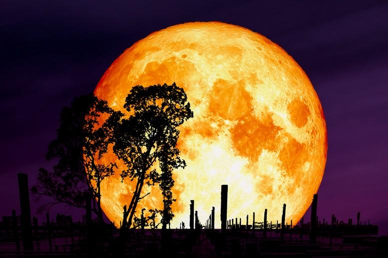 wolf blood moon meaning astrology - photo #19