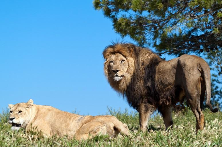 Disney Released Trailer For New Live Action Lion King Film During