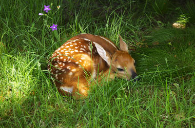 Bambi, Deer, Animal, Disney, Sleeping, Cute