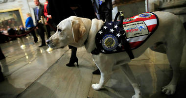 Sully, former President George H.W. Bush's service dog