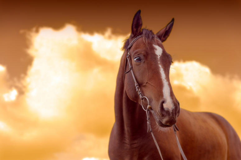 Brown Horse, Sunset