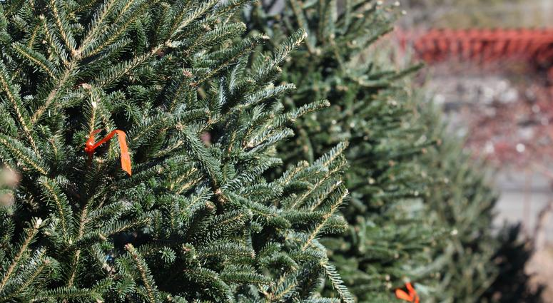 Willey Farms near Townsend, Delaware, selling Christmas trees, wreaths and roping. The business sustained massive damage during a fire in November 2018.