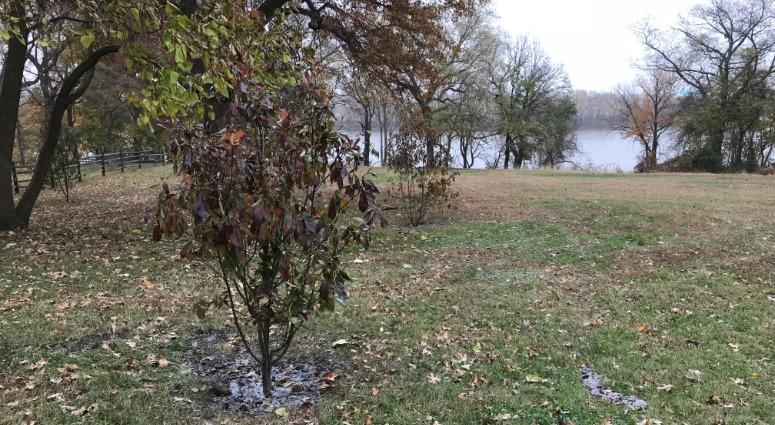 "The DAR, or Daughters of the American Revolution — along with USA250 and the Pennsylvania Horticultural Society — donated 250 trees to create the ""DAR Pathway of the Patriots"" along the Schuylkill River, honoring patriots of the American Revolution."
