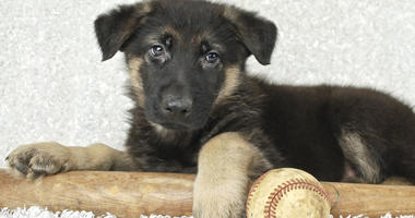 Real Underdogs: Phillies host four-legged fans to support pet adoption