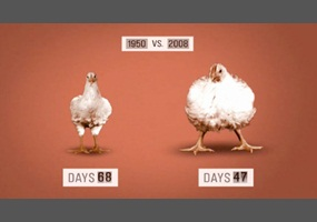 should a restaurant be allowed to sell genetically modified chicken