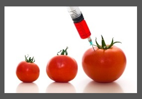 Genetically modified foods an essay