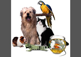 Animals Kept As Pets