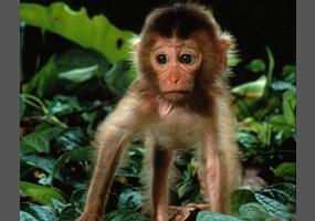 Are Monkeys Good Pets Debate Org