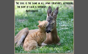 Do animals have souls? | Debate org