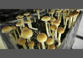 Could magic mushrooms be the cure for depression that we need