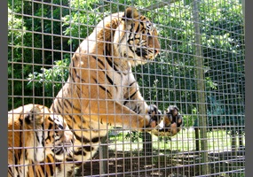 Zoos should be abolished  Yes or no? | Debate org
