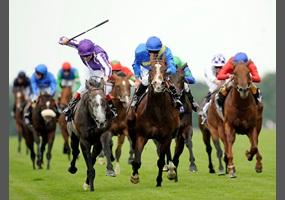 Ban horse racing australia betting lsu vs florida 2021 betting line