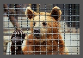 should we ban zoos