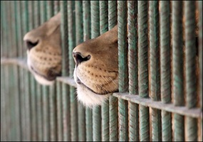 is it ethical to keep animals in zoos