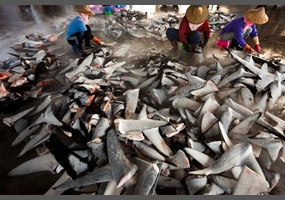 is shark finning banned in the us