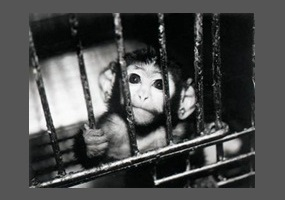 animal experimentation articles pros