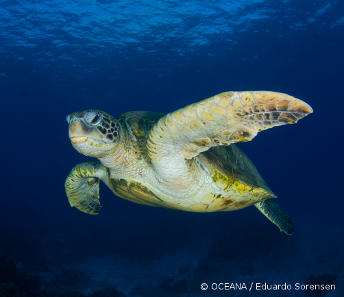 Sign our petition and help save sea turtles.