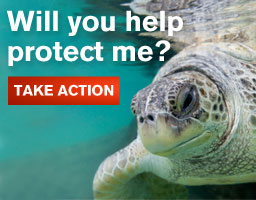Take action to save turtles