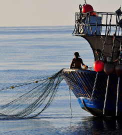 Moroccan Fisherman Uses Illegal Drift Gillnet