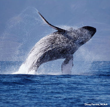 Add your name to protect the Atlantic from seismic blasting.