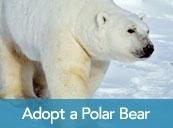 Protect Polar Bears
