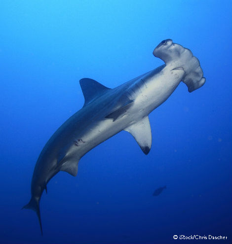 Add your name to protect sharks from the global fin trade.