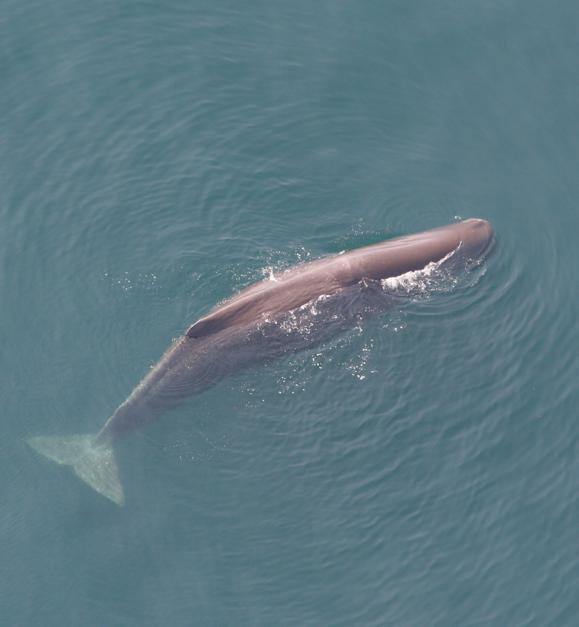 Lend your voice to help save sperm whales.