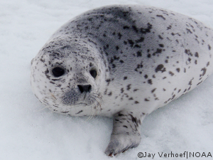 Tell President Obama: No new offshore drilling in the Atlantic and Arctic!