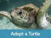 Protect Sea Turtles