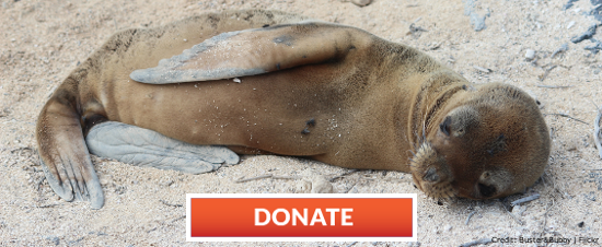 Give now and your gift will be MATCHED, dollar for dollar, by a generous donor.