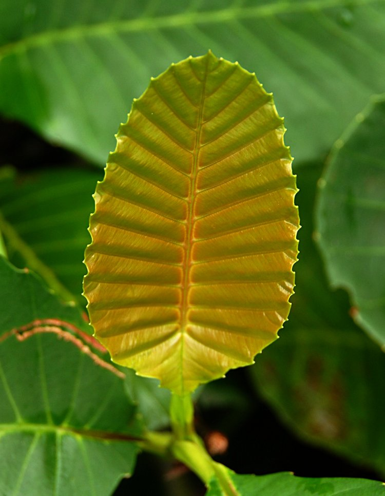 small/dec_03_0796_leaf.jpg