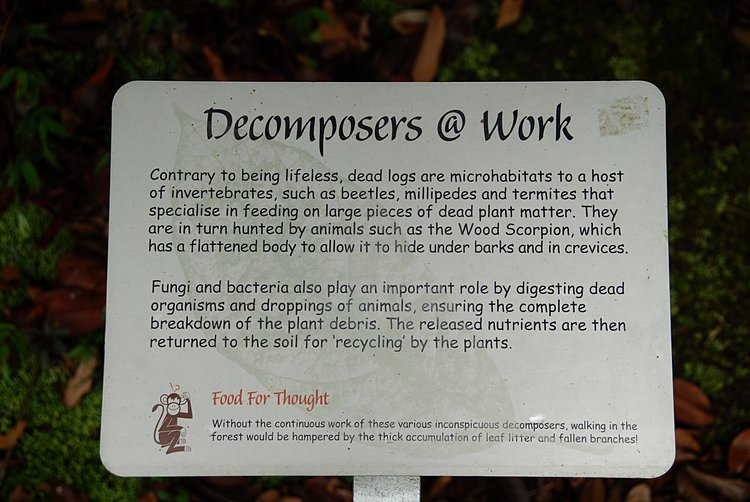 small/dec_03_0830_decomposers.jpg