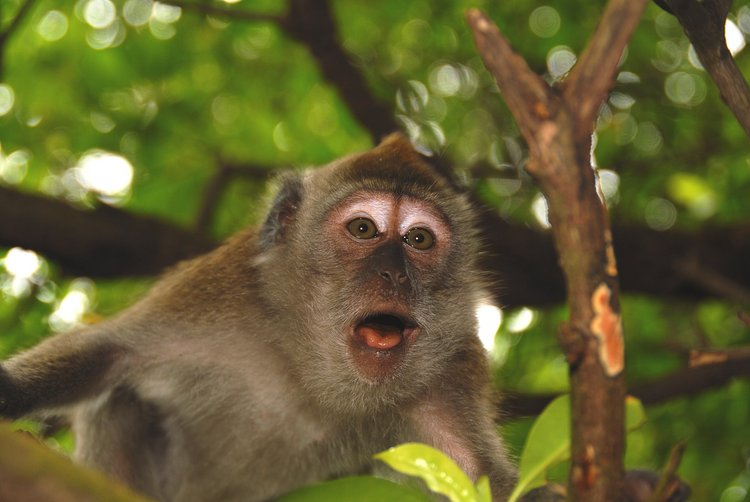 small/dec_03_0900_monkey_mouth.jpg